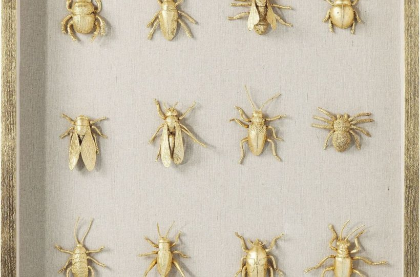 Superspectives - carnaval entomologique